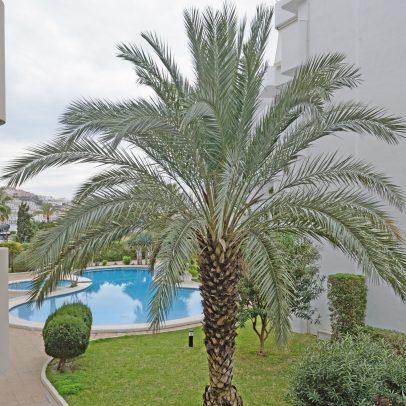 Immobiliaria Ibiza, Solana Ibiza, Ibiza Properties, Real Estate Ibiza, Apartment For Sale, Mediterraneo15