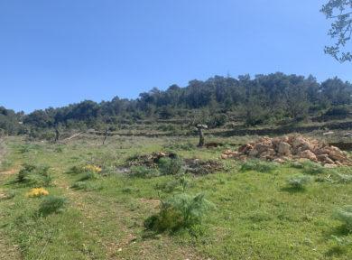 Plot of land for sale in Santa Gertrudis Ibiza